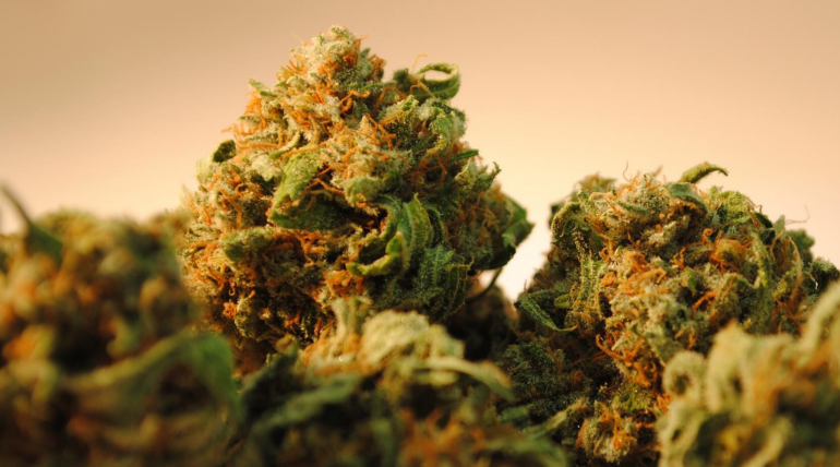 How To Choose The Perfect Cannabis Strain?